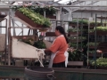 greenhouse-worker3